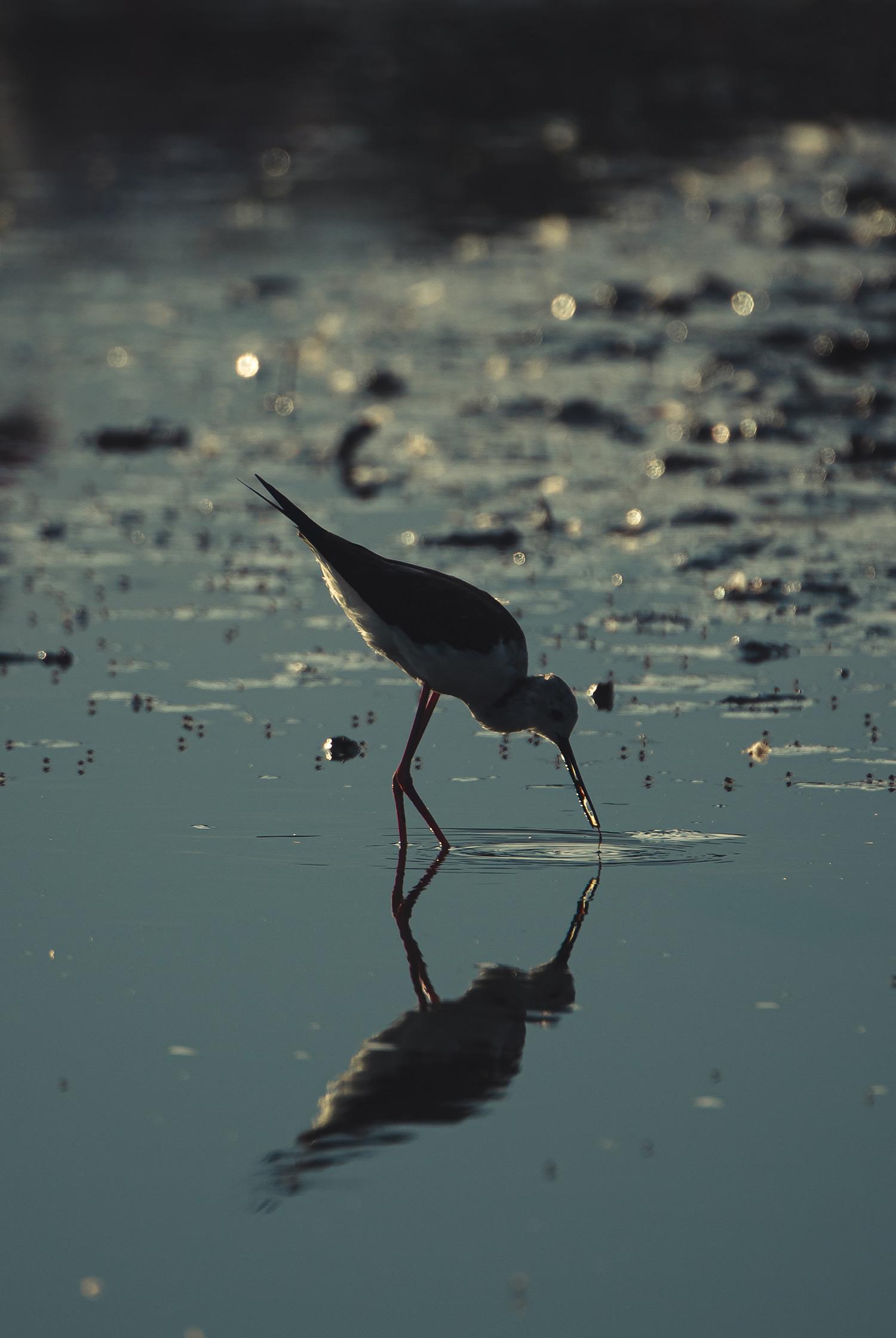 Petit oiseau dans l'eau